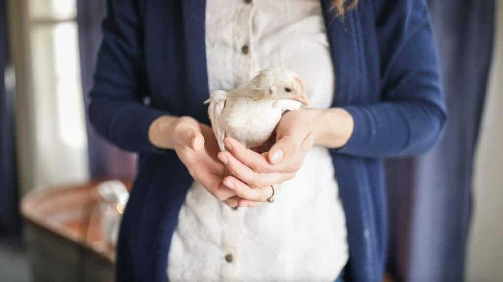 women holding baby chicks - how to care for chickens in winter
